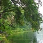 Hutan Wisata Kucur