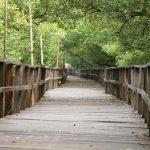 Hutan Mangrove Morosari